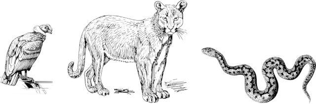 Trilogía inca (Cóndor, Puma y Serpiente)